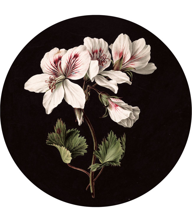 Behangcirkel White Flowers, ø 190 cm