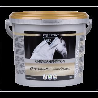 Equistro Chrysanphyton grl