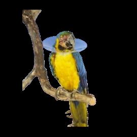 Vogelkraag