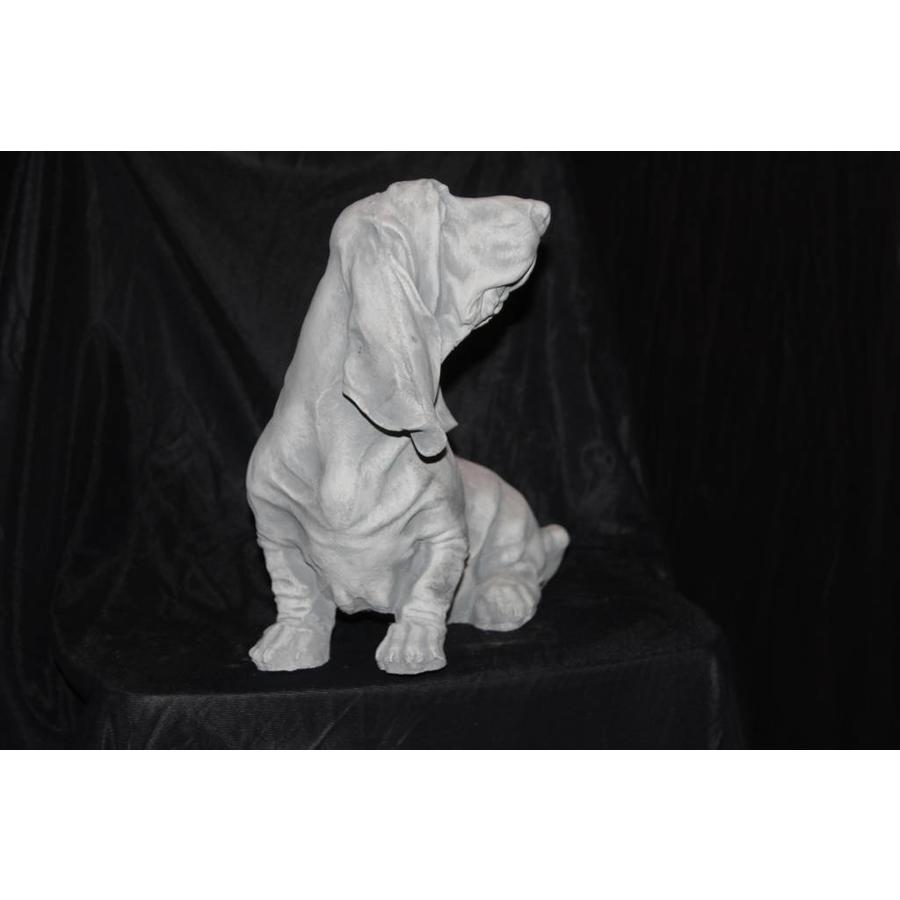 Basset Jachthond-2