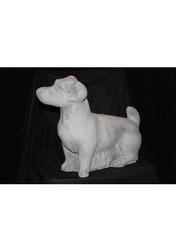 Jack Russell staand