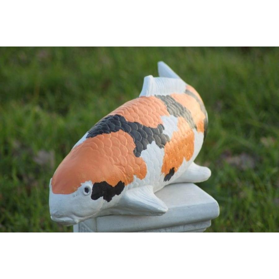 Showa koi karper in oranje kleur-10