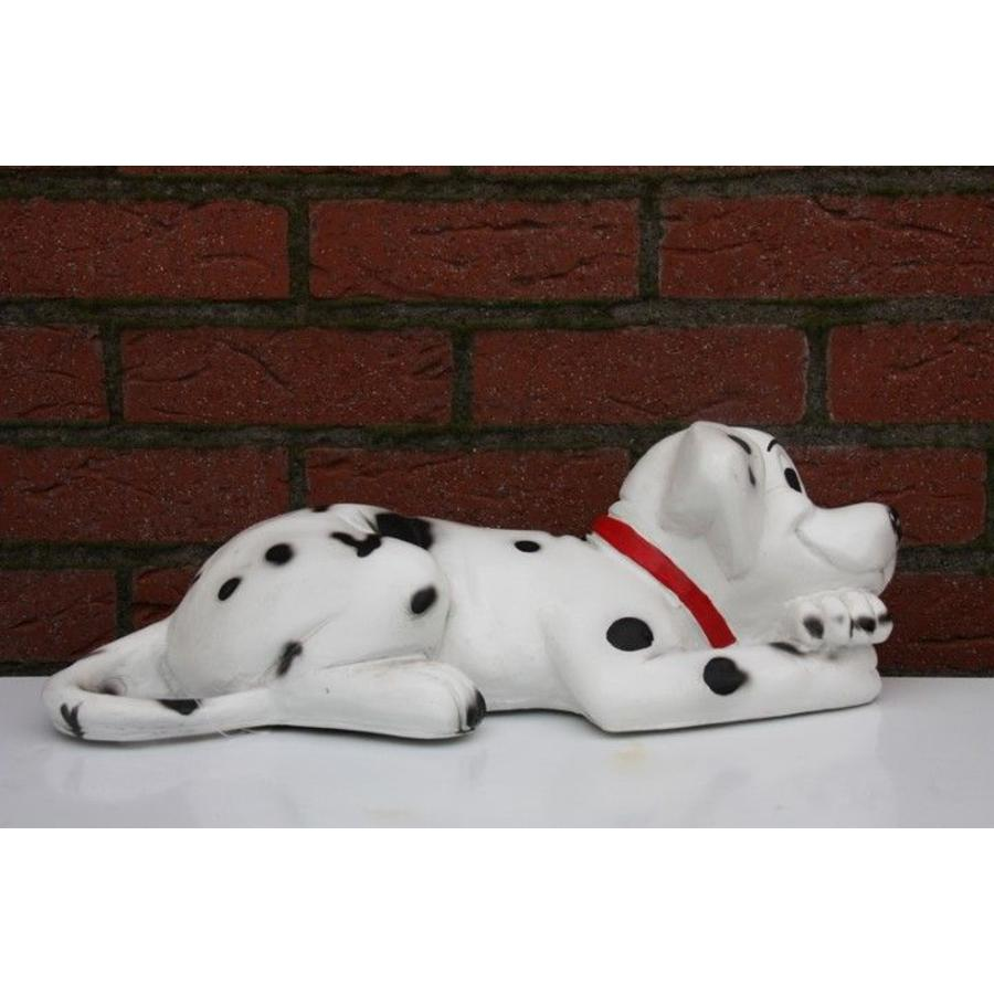 Dalmatiër spikkel hond-2