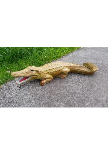 krokodil, Alligator of kaaiman
