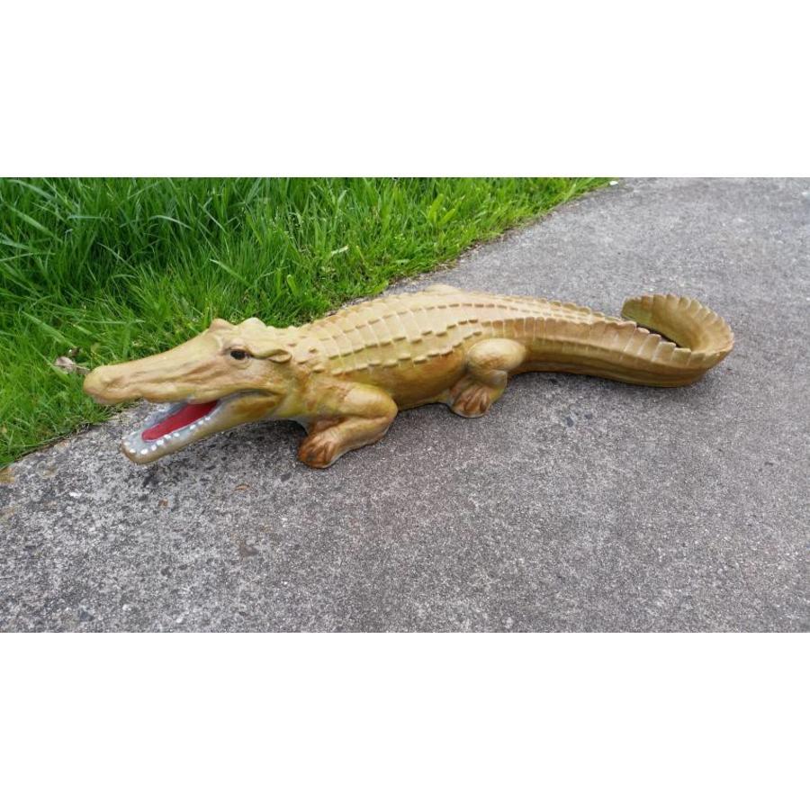 krokodil, Alligator of kaaiman-1