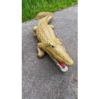 thumb-krokodil, Alligator of kaaiman-2
