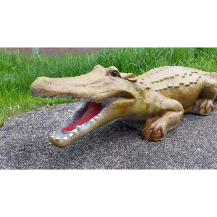 krokodil, Alligator of kaaiman-4