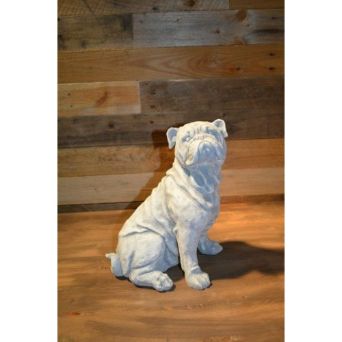 Buldog zittende  hond