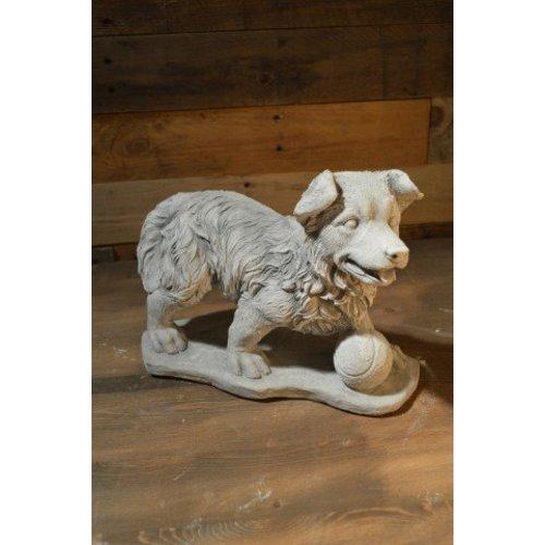 Hond met tennisbal voor zich
