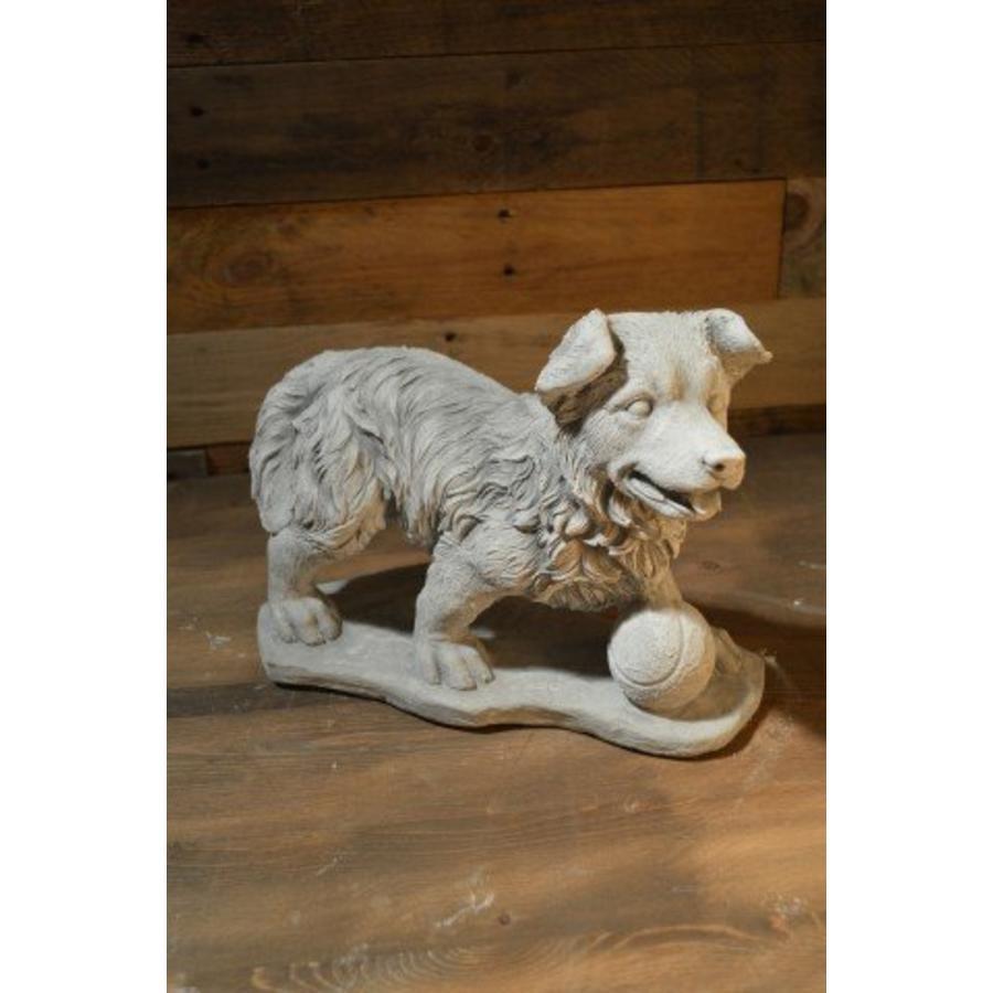 Hond met tennisbal voor zich-1