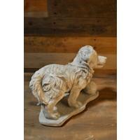 thumb-Hond met tennisbal voor zich-3