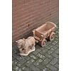 Meulenveld Tuinbeelden Belgisch trekpaard met kar