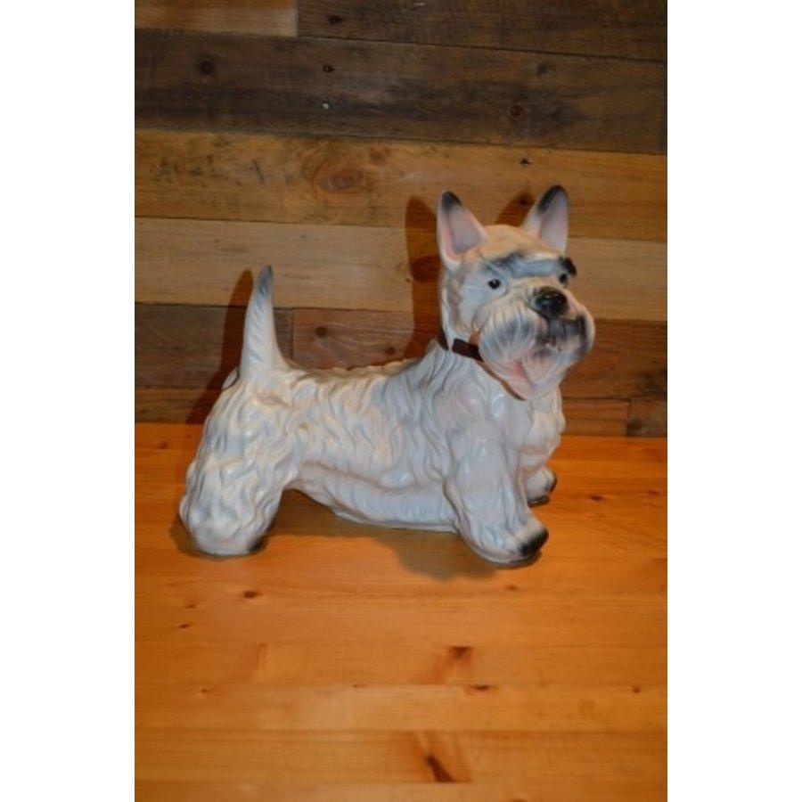 Schotse Terriër hond-1
