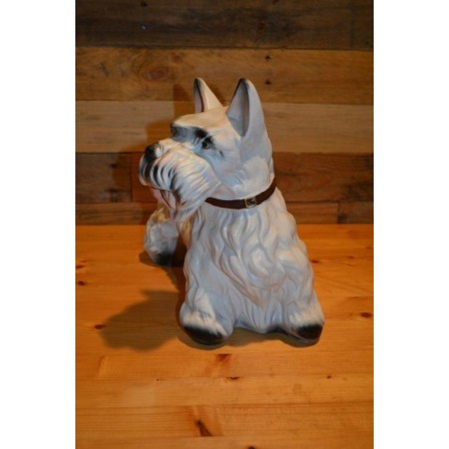 Schotse Terriër hond-2