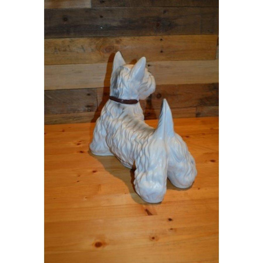 Schotse Terriër hond-3