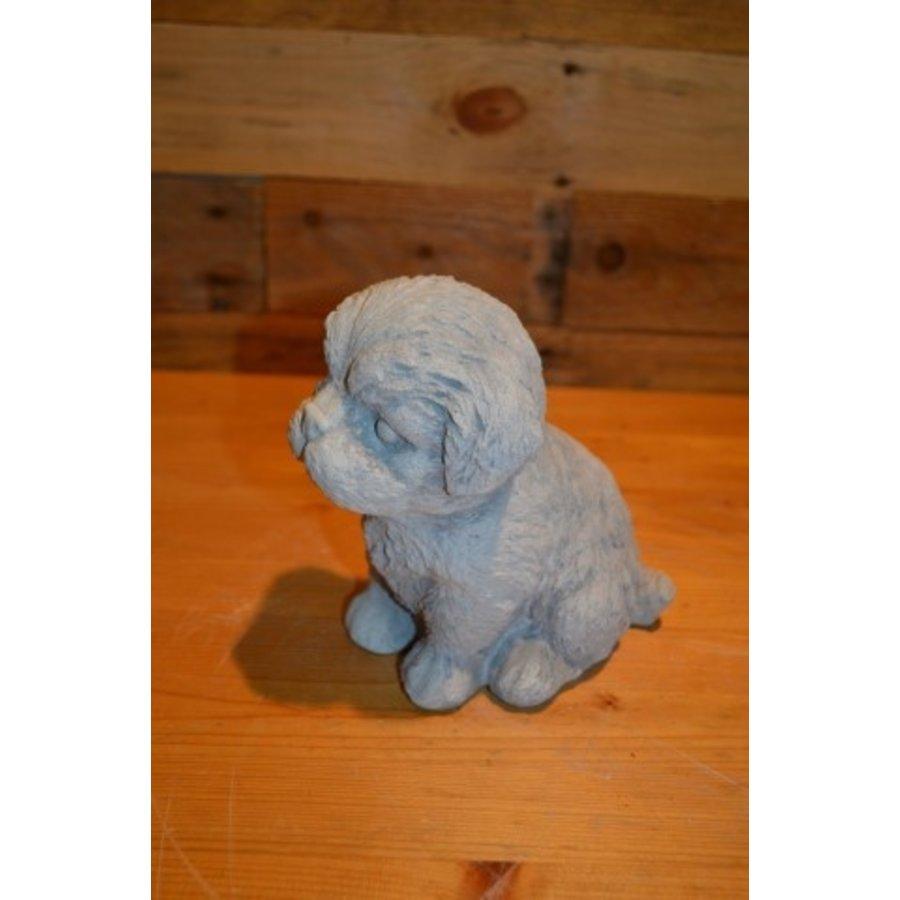 Hond Maltezer leeuwtje pup-1