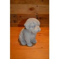 thumb-Hond Maltezer leeuwtje pup-2