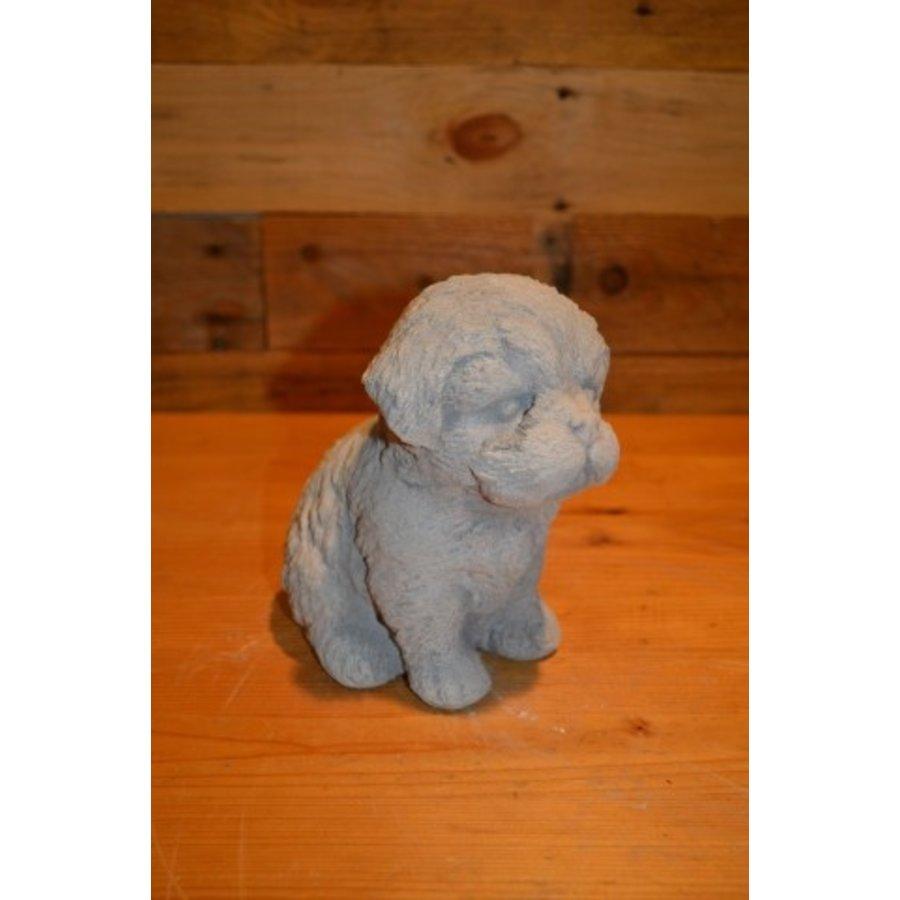 Hond Maltezer leeuwtje pup-2