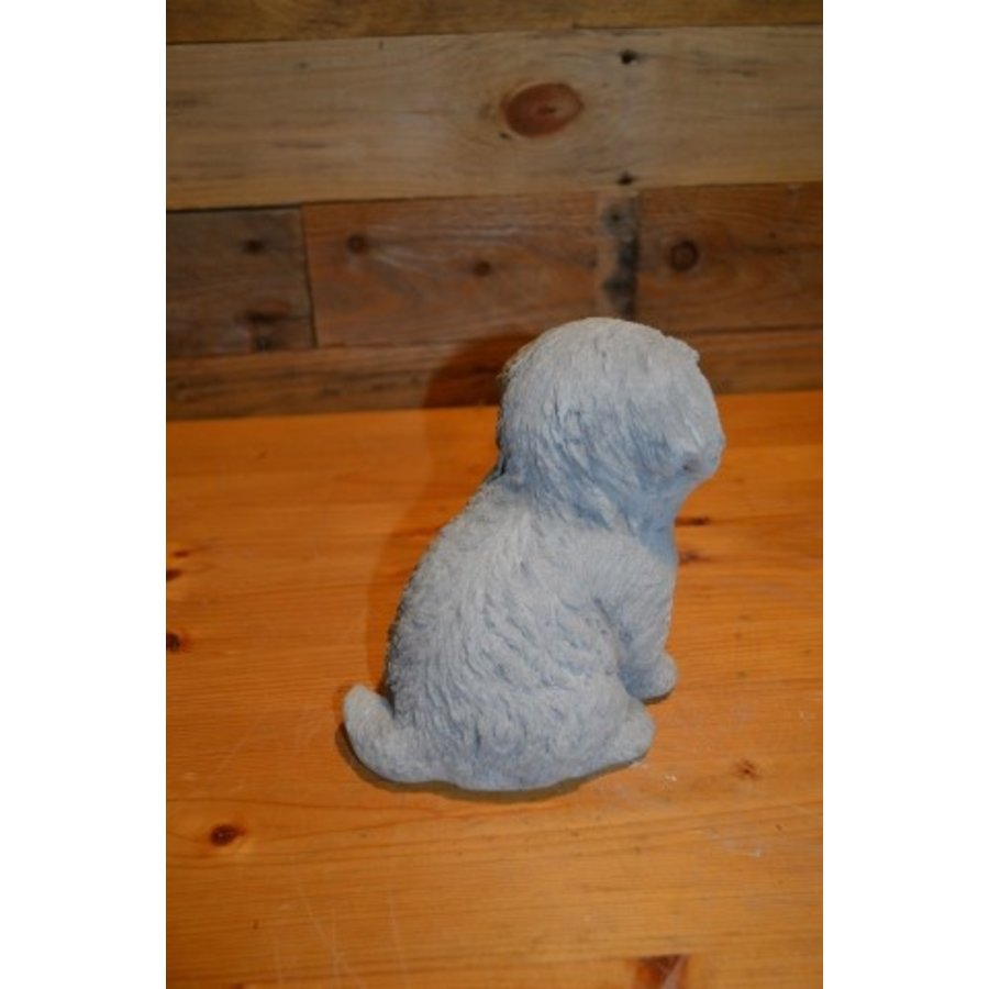 Hond Maltezer leeuwtje pup-3