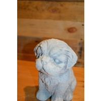 thumb-Hond Maltezer leeuwtje pup-4