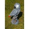 Meulenveld Tuinbeelden Grijze roodstaart papegaai