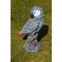 thumb-Grijze roodstaart papegaai-1