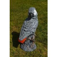 thumb-Grijze roodstaart papegaai-2