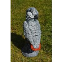 thumb-Grijze roodstaart papegaai-3