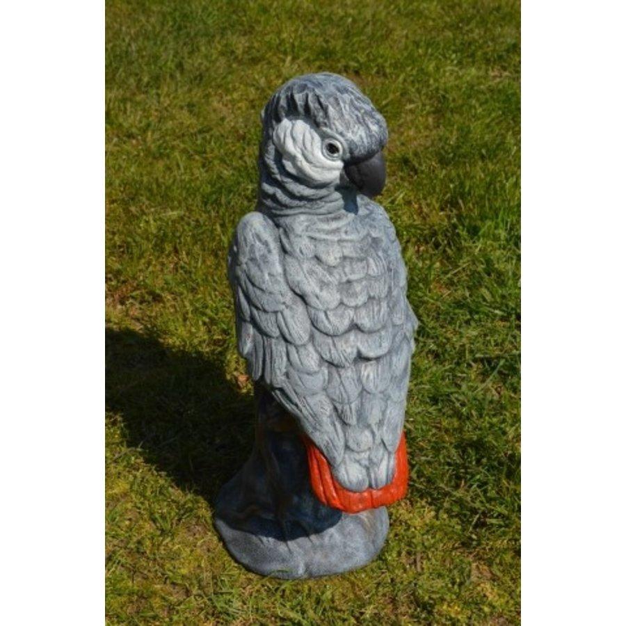 Grijze roodstaart papegaai-3