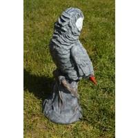thumb-Grijze roodstaart papegaai-4