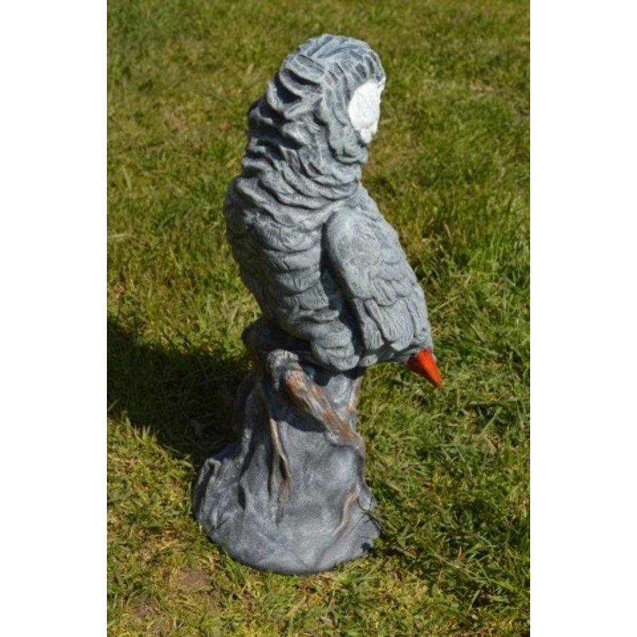 Grijze roodstaart papegaai-4