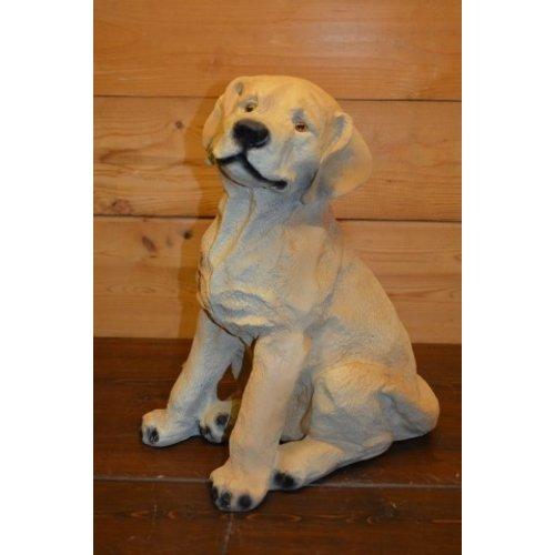 Golden retriever hond