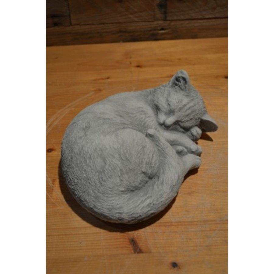 Slapende kat-1