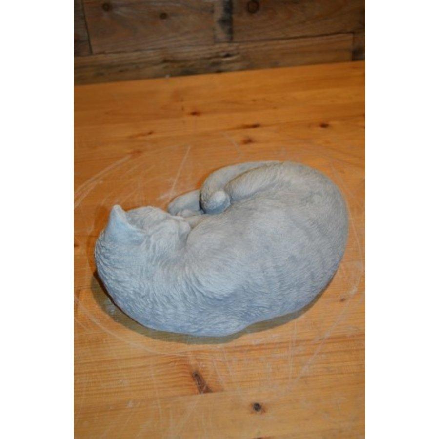 Slapende kat-4