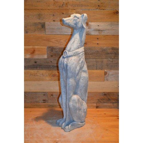 Galgo Greyhound of hazewind hond