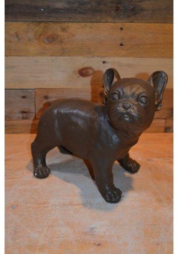 Franse Buldog of bulletje,  hond in kleur