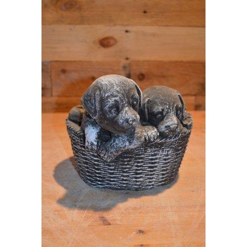 2 lieve puppy hondjes in een mandje