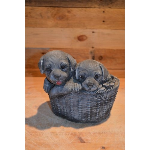 2 leuke honden puppy's in een mandje