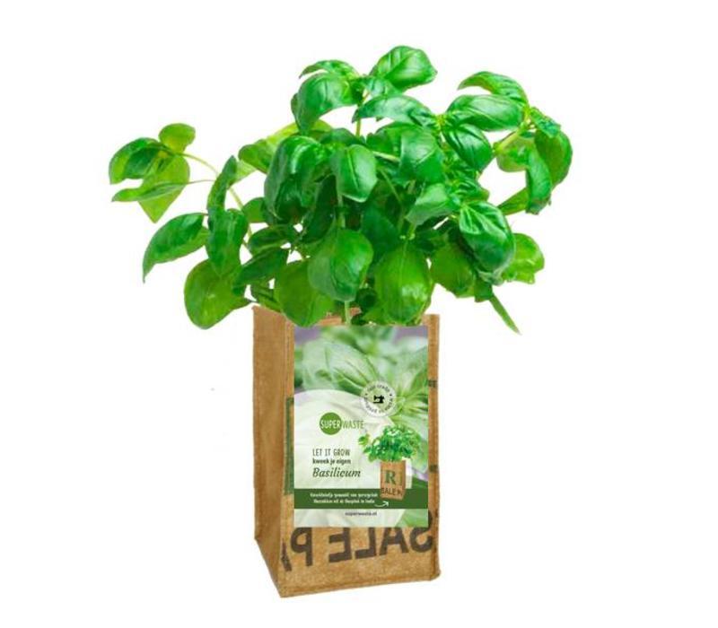 Let it grow - Basilicum
