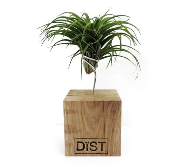 Dïst airplant Brabants eiken 14x14