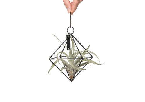 Airplants MRS Bloom hanger met airplant