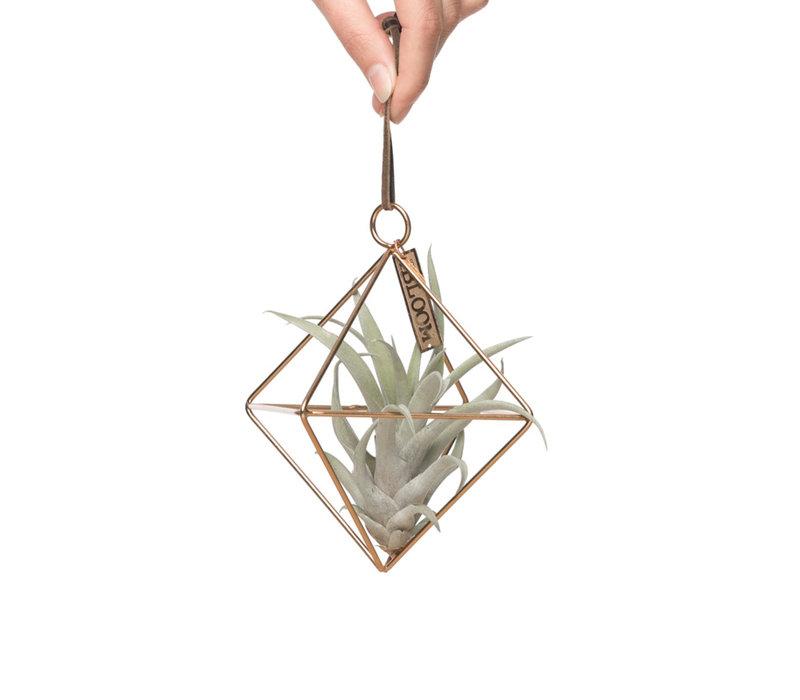MRS Bloom hanger met airplant