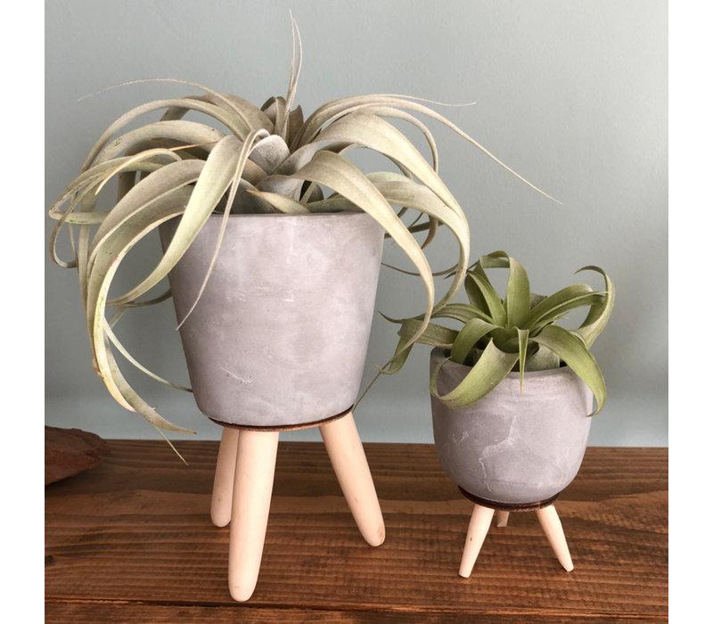 Airplantje in cementpotje