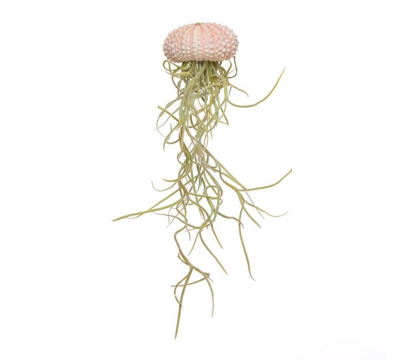 Jellyfisch small roze + tillandsia