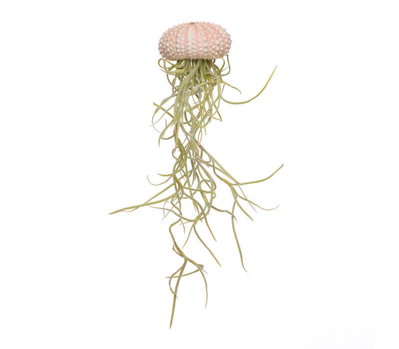 Jellyfisch small wit+ tillandsia