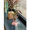 Airplants Airplant Flamingo - kromme nek