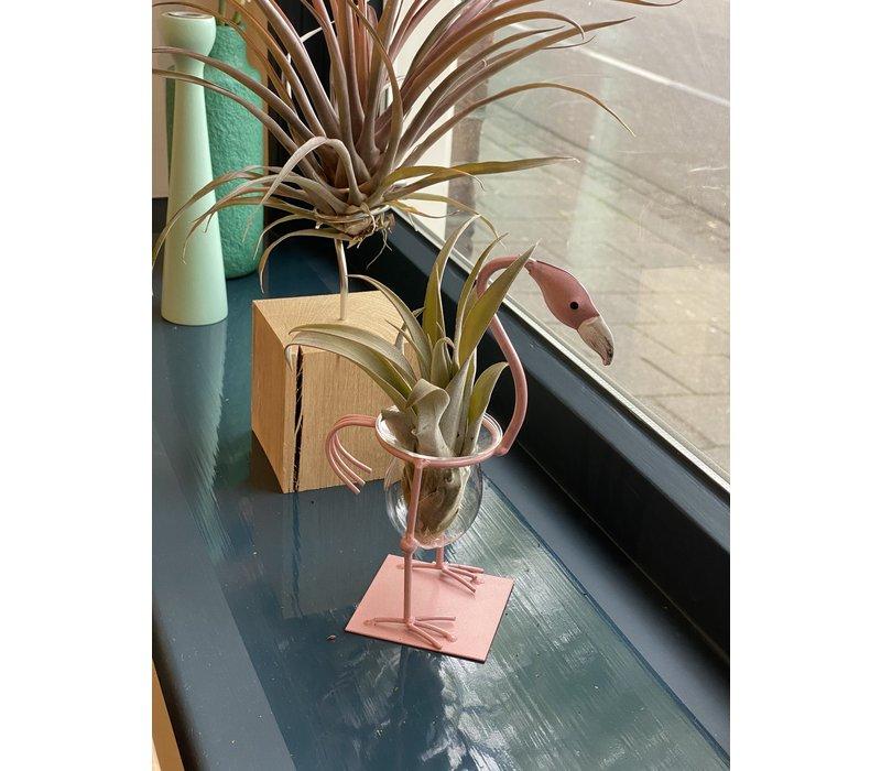 Airplant Flamingo - kromme nek