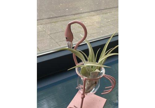 Airplants Airplant Flamingo - gebogen nek