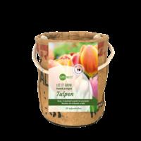 Kweekpot tulpenbollen