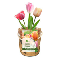 Kweekpot tulpenbollen - large